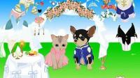 猫狗的婚礼展示四
