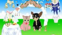 猫狗的婚礼展示五