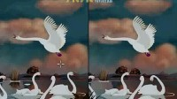 丑小鸭的成长故事13