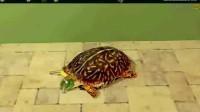 乌龟房间逃脱通关攻略