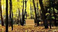 秋季森林逃脱