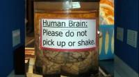 挑战你的大脑