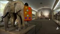动物博物馆逃脱